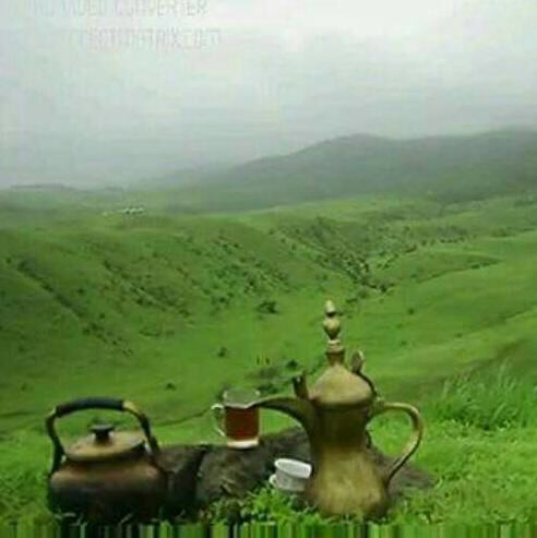 tea and mountain