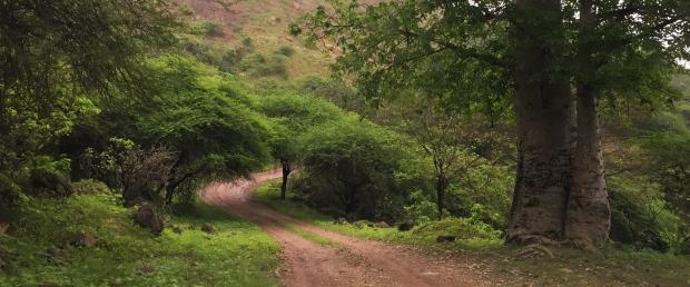 road - khareef