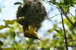 bird weaver 2 - sb
