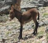 donkey - sb